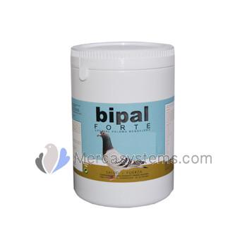 Bipal Forte 1 kg, (Premium top quality probiotics, vitamin, minerals and  amino acids)